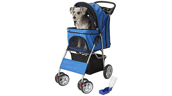A small gray dog sitting in a blue pet stroller with black accents and a black basket beneath, with a portable hydration station on the ground next to it.
