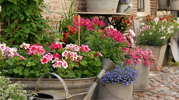 Pink, red, purple, and white flowers in metal planters.