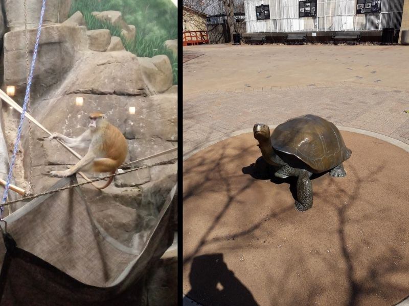 A Patas Monkey and a bronze statue of a tortoise.