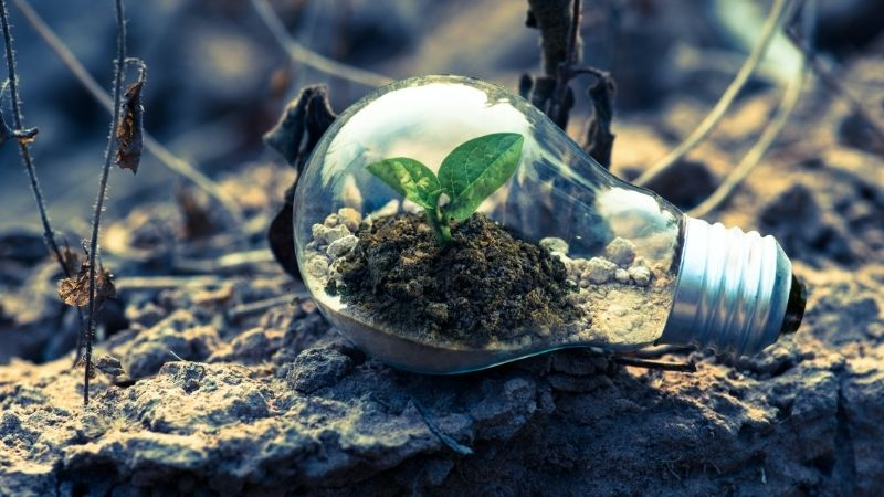 A sprouting plant inside a lightbulb, by Singkham