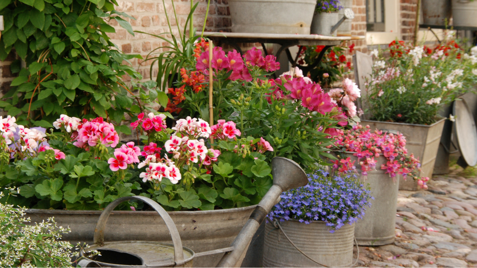DIY planters metal buckets and watering cans