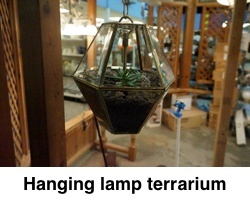 Hanging_lamp_terraium_with_caption